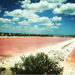 pink salt lagoons in the yucatan