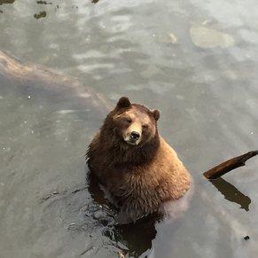 Bear rehab