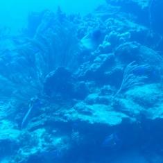 Atlantis Sub, Cozumel