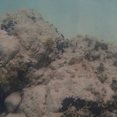Philipsburg, St. Maarten - Under water view