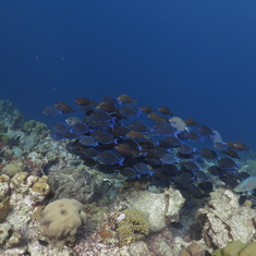Kralendijk, Bonaire - And schools of fish