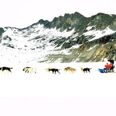 Juneau, Alaska - Dog SLedding