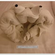 Night 2:  Frog