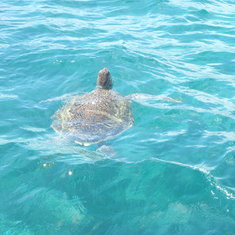 Sea turtle from our excursion boat in Cosa Maya