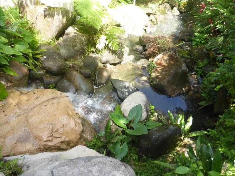 National Park -  Rainforest - Carnival Dream