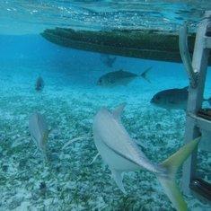 Belize City, Belize - Belize Snorkling