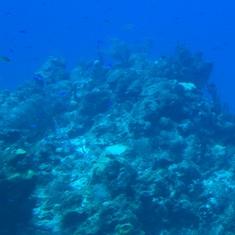 Cozumel, Mexico - Atlantis Submarine - Cozumel