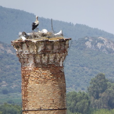 Storks nesting in Turkey