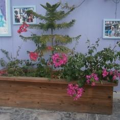 Grand Turk Island - A nice plant arrangement