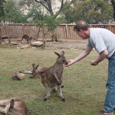 Feeding Kangaroos at Bonorong