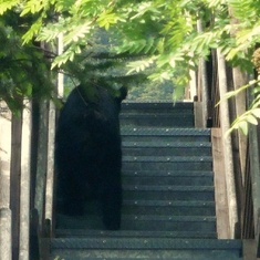 Juneau, Alaska - Stairs for bears in Juneau!