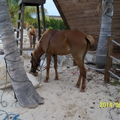 A horse eating a coconut. No lie.