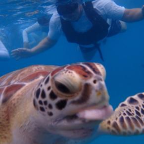 Snorkeling in Barbados.