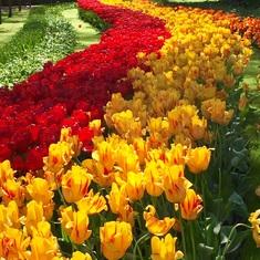 Amsterdam, Netherlands - Keukenhof Gardens