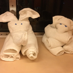 Cute towel animals were placed on our beds after dinner.