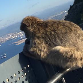 Ape's den