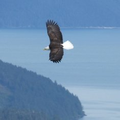 Pic from Alaska - Gulf of Alaska by j3ff