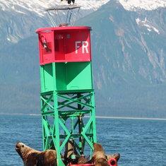 Juneau, Alaska - Whale Watching