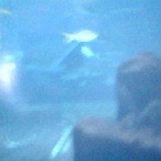 Aquarium in the Atlantis