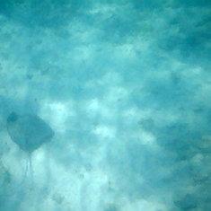 Stingray swimming under me