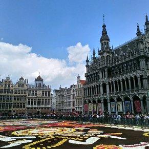 Flower Carpet Brussels 🇧🇪
