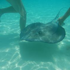 George Town, Grand Cayman - Stingray City