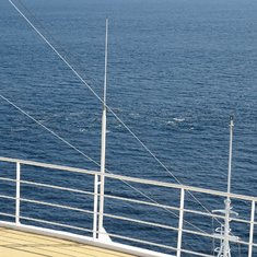 A pod of dolphins in the Gibraltar straits