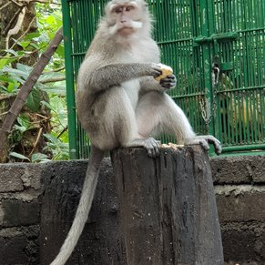 Monkey Forest in Bali