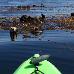 Rent a Kayak at Monterey Bay Kayaks, close to where the ship tenders, to the Left of the Wharf.