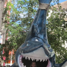 Cozumel, Mexico - Shark Attack :)