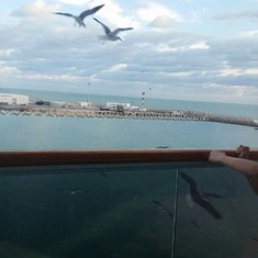 WATCHING SEA GULLS FROM BALCONY