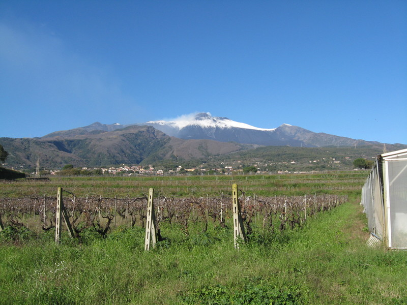 Catania, Sicily - Snow capped Mt Etna, Sicily, one wine tour