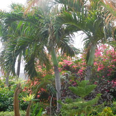 Grand Turk Island - Tropical plants