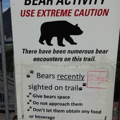 No bears sighted on our cruise.
