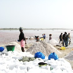 Dakar, Senegal - Senegal, The Pink Lake--Harvesting salt commerically