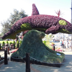 Victoria, British Columbia - Whale in Victoria