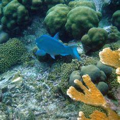 Coral reef (and inhabitants) Bonaire