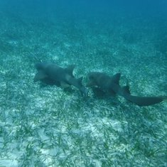 Belize Snorkling