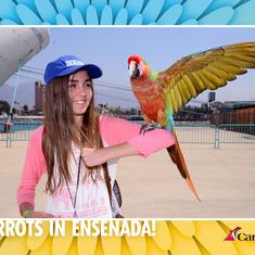Welcome to Ensenada