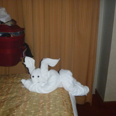 Towel animals on our bed every night
