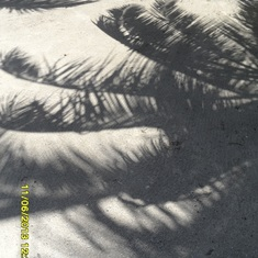 Belize City, Belize - palm shadow on the sand