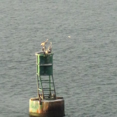 Bouy with pelican while we wait to entr the locks