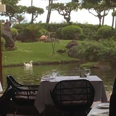 Dining at Hyatt Hotel