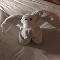 Favorite towel animal