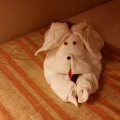 creative towel animals everyday