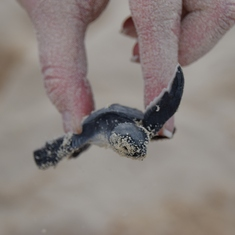 Save-a-Turtle Excursion - Cozumel