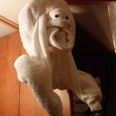 Room - towel animal