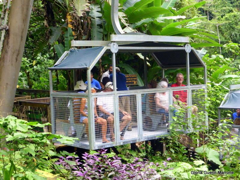 Rain Forest Puerto Limon, Costa Rica - Amsterdam