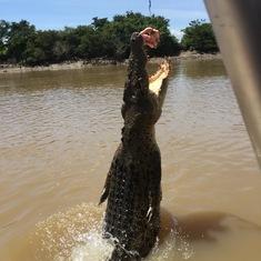 Jumping croc, Darwin.