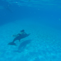 Cabo San Lucas, Mexico - swimming under water with the dolphin